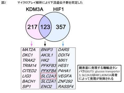 mimura2.JPG